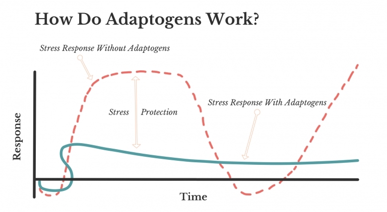 How Do Adaptogens Work?