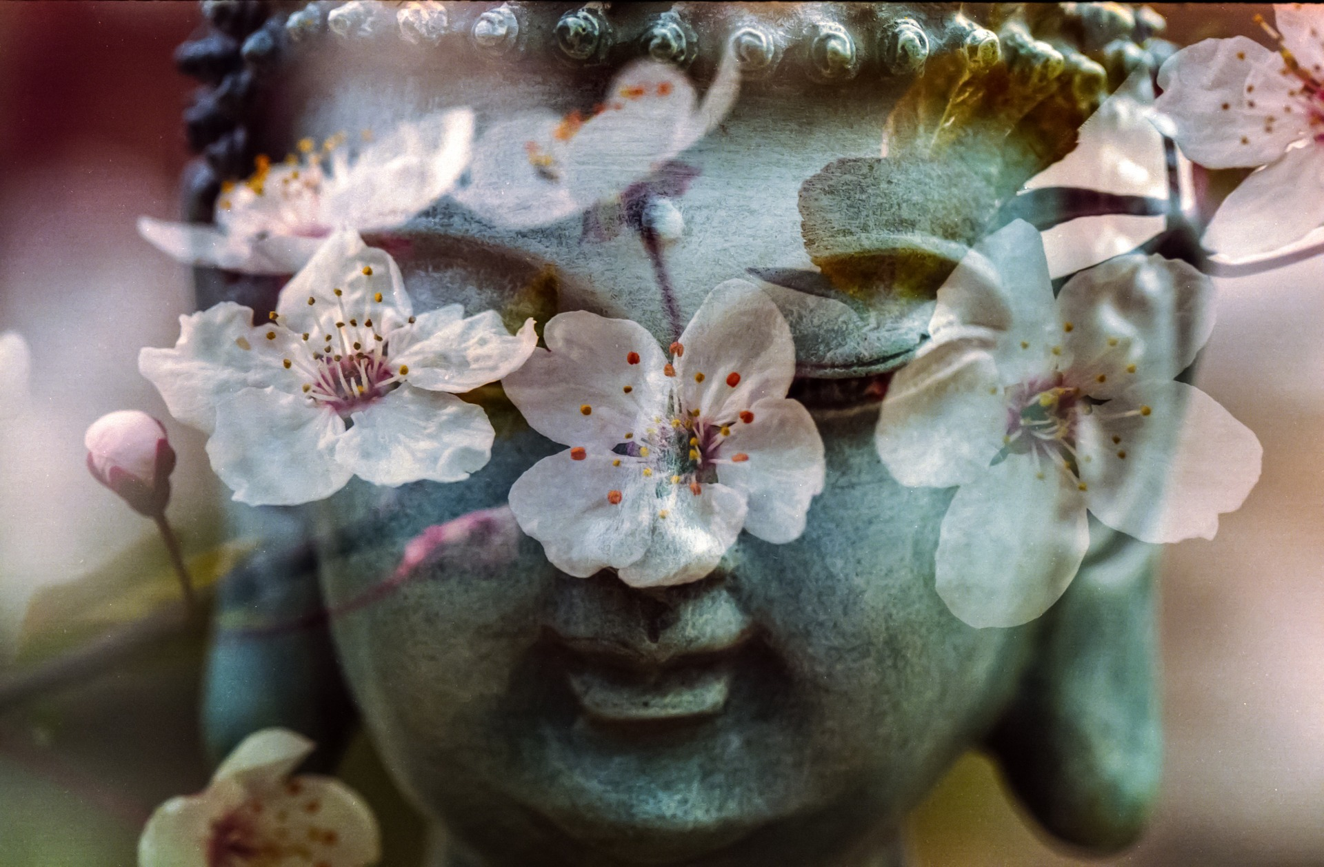 A buddha head status with delicate flowers superimposed