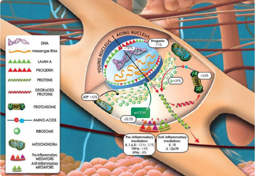 A biomedical illustration of cell function