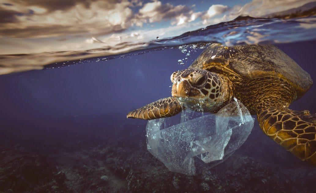 An ocean turtle eating a plastic bag