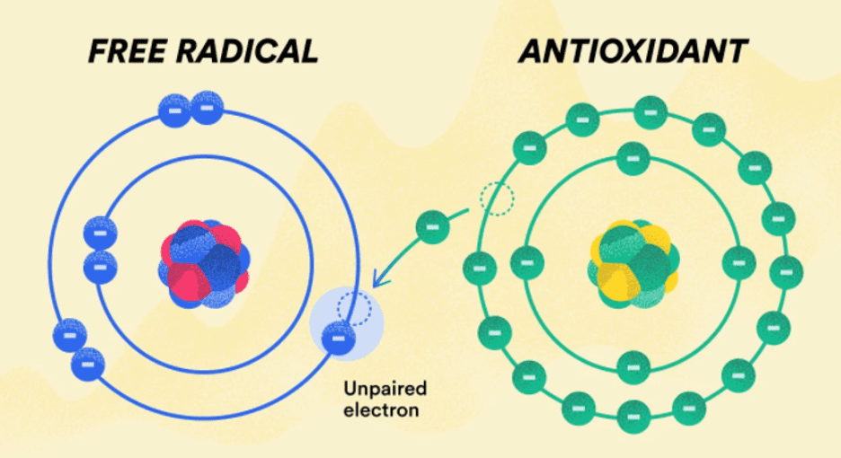 how antioxidants work - they donate an electron