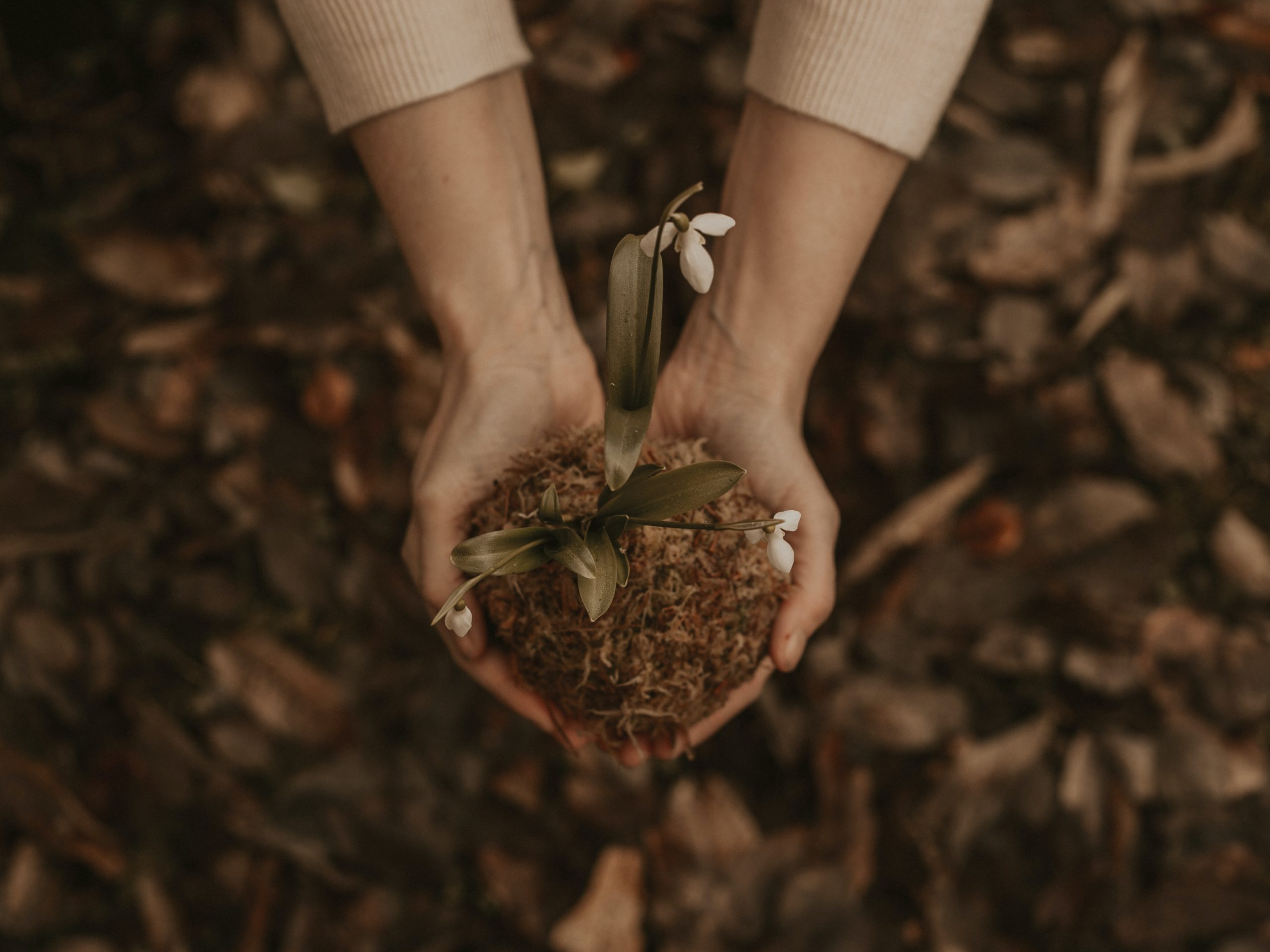 Hands holding dirt with a solitary flower